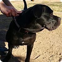 Adopt A Pet :: TJ - Phoenix, AZ