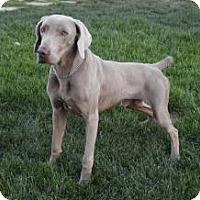 Adopt A Pet :: Captain - Sun Valley, CA