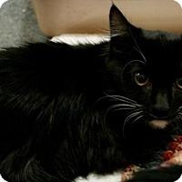 Adopt A Pet :: Grumplestilskin - Sacramento, CA
