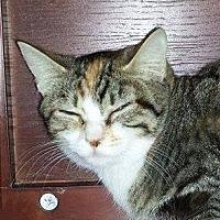 Adopt A Pet :: Daphne - Putnam, CT