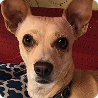 Adopt A Pet :: Baby - Tucson, AZ