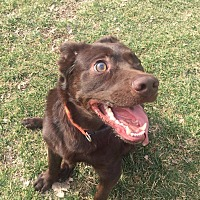 Adopt A Pet :: Chubs - Guelph, ON