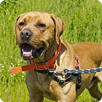 Adopt A Pet :: Bongo - Bellingham, WA