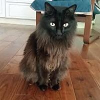 Adopt A Pet :: Jiji - Chandler, AZ