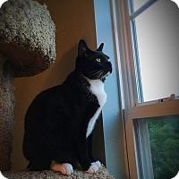 Adopt A Pet :: A..  Brent - Charlotte, NC