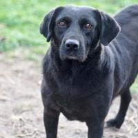 Adopt A Pet :: Buddy - Andover, MA