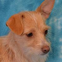 Terrier (Unknown Type, Medium) Mix Dog for adoption in Eureka, California - Whey
