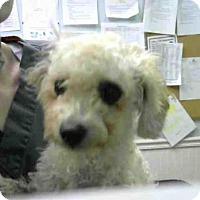 Adopt A Pet :: NUTMEG - Atlanta, GA