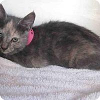 Adopt A Pet :: *SUNSET - Norco, CA