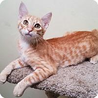 Adopt A Pet :: Mister - Hammonton, NJ