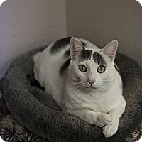 Adopt A Pet :: Suetonia - St. Petersburg, FL
