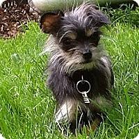 Adopt A Pet :: Angelina -ADOPTED - Warwick, NY