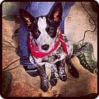 Adopt A Pet :: Jenna - Carey, OH