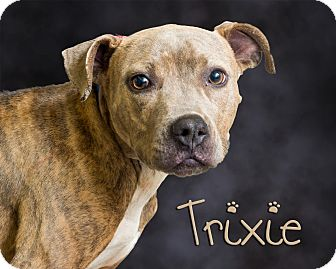 Pit Bull Terrier Mix Dog for adoption in Somerset, Pennsylvania - Trixie