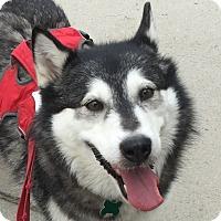 Adopt A Pet :: ABBY - Adoption Pending - Boise, ID