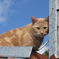 Adopt A Pet :: Archie - Richmond, CA