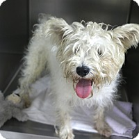 Adopt A Pet :: Austin - before and after - Norwalk, CT