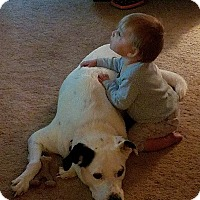 Adopt A Pet :: Irish - Blue Bell, PA