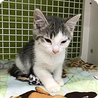 Adopt A Pet :: pawla - millville, NJ