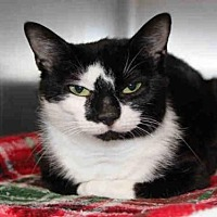 Adopt A Pet :: MIRANDA - Hampton Bays, NY