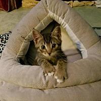 Adopt A Pet :: Noly - Agoura Hills, CA