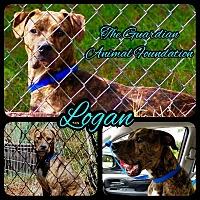 Adopt A Pet :: Logan - Greenville, NC