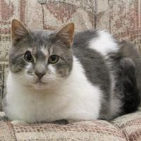 Adopt A Pet :: Moby - Dodgeville, WI