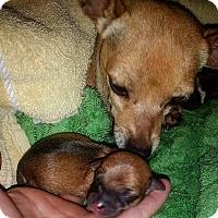 Adopt A Pet :: Neon - Henderson, NV