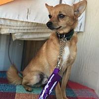 Adopt A Pet :: Toby - Elk Grove, CA