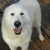 Adopt A Pet :: RUBY & HARRIS - Granite Bay, CA