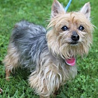 Adopt A Pet :: Max - Chester Springs, PA