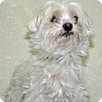 Adopt A Pet :: Herbie - Port Washington, NY