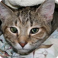 Adopt A Pet :: Tawney - Frederick, MD