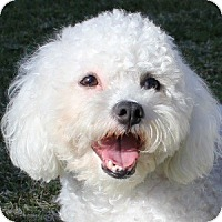 Adopt A Pet :: Jo Jo - La Costa, CA