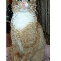 Adopt A Pet :: Gee Gee - Acme, PA