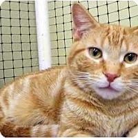 Adopt A Pet :: Cicero - Alexandria, VA