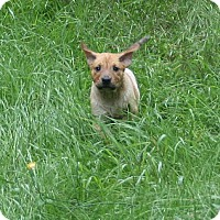 Adopt A Pet :: Cuddles - Holland, MI