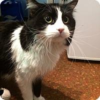 Adopt A Pet :: Princeton - New York, NY