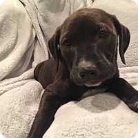 Adopt A Pet :: Shiloh - Lewisville, IN