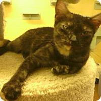 Adopt A Pet :: Sushi - Lake Charles, LA