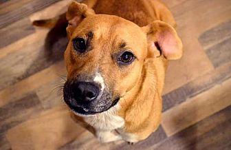 Labrador Retriever Mix Dog for adoption in Waterbury, Connecticut - Sadie