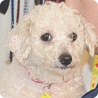 Adopt A Pet :: Irena - Prole, IA