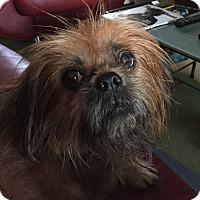 Adopt A Pet :: Peyton - Richmond, VA