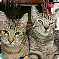 Adopt A Pet :: Dynamo & Tigger - Walnut Creek, CA