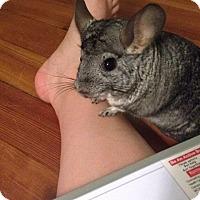 Adopt A Pet :: Salamo - Granby, CT