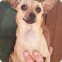 Adopt A Pet :: Bug - Gainesville, FL