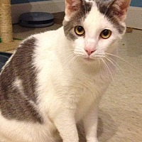 Adopt A Pet :: Edward - LaGrange, KY