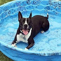 Labrador Retriever Mix Dog for adoption in Hampton Bays, New York - GEORGIA