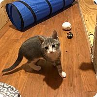 Adopt A Pet :: Lily - Millersville, MD