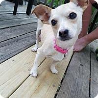 Adopt A Pet :: Fallyn - Kansas City, MO
